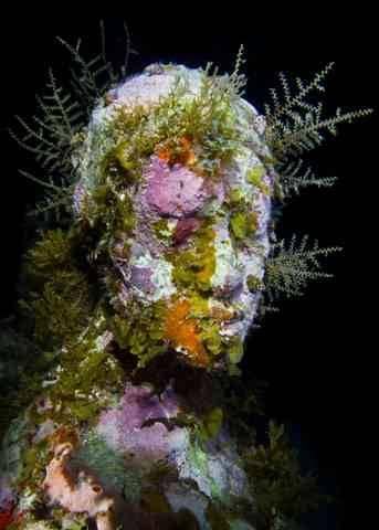 underwater-museum-book4-lgn